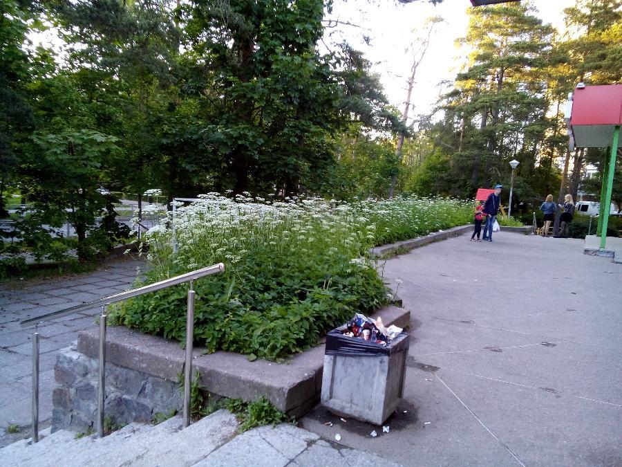 """Клумбы у """"Пятерочки"""" на ул. Комсомольской пока выглядят так. Фото Валентины Корюковой"""