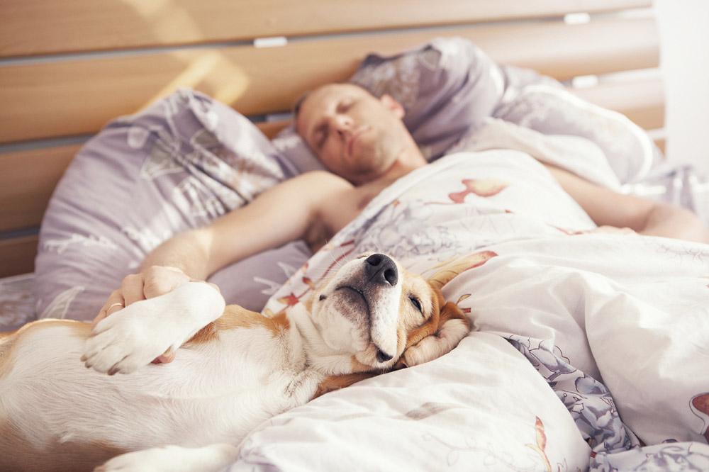 во сне прятаться от собаки спасибо