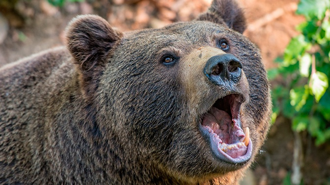 Старушка застряла втрясине исутки отпугивала медведя рыком втайге Хабаровска