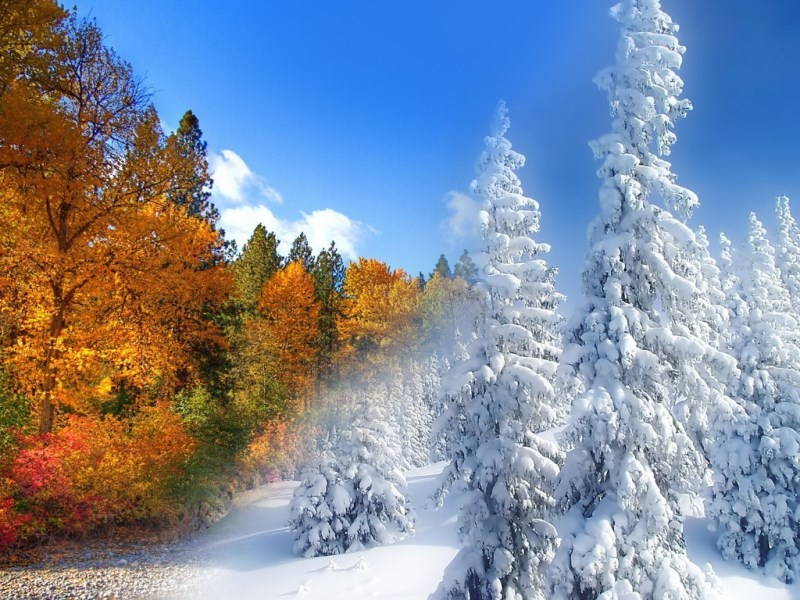 Картинки зимних и осень