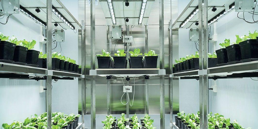 В Сосновом Бору планируют создавать новые сорта растений