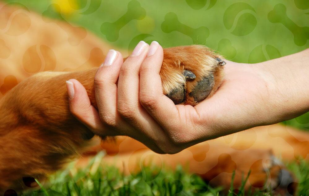 узнать, как картинки на охрану животных если этого подобных