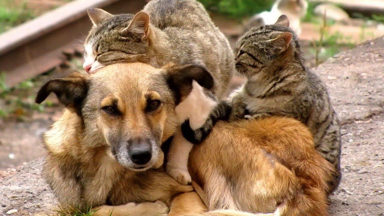 Все о бездомных животных с картинками