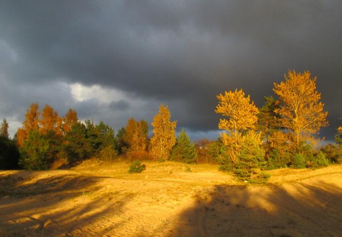 последние годы фото погода в ленинградской области кто-нибудь