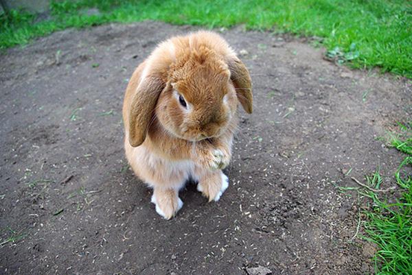 фото плачущий зайка кролик ламбрекены это
